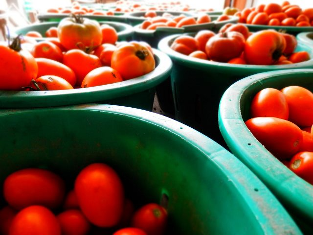 Tomatoes (Photo by Meghan Filoromo)