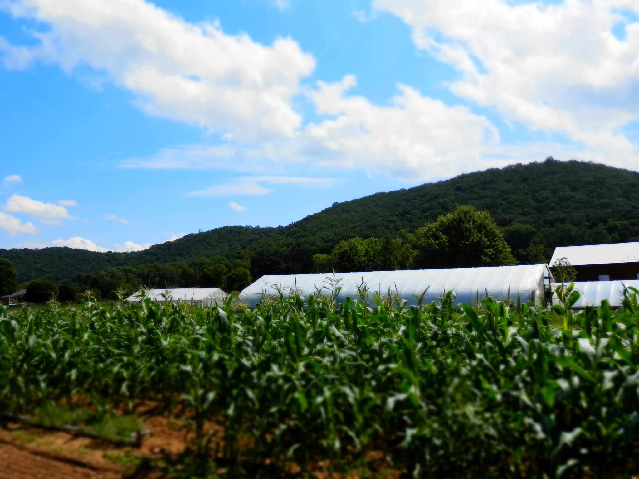 Farm (Photo by Meghan Filoromo)