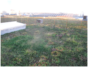 PECO Green Roof by Dave Hecht