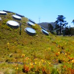 Green Roof in San Francisco